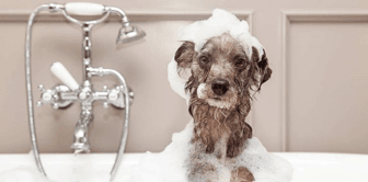 4 Ways to Pet-Proof Your Plumbing